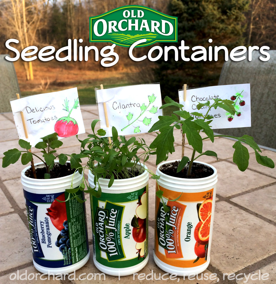 Reuse Old Orchard frozen juice cans to plant seedlings